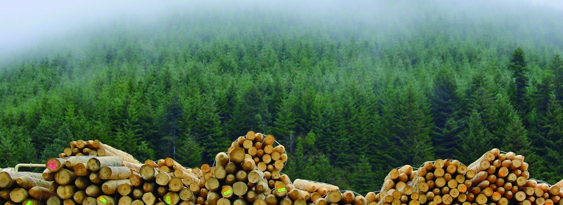 Logs and Forest
